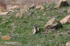 Ein Erdmännchen lässt sich von uns nicht stören und isst in Ruhe zu Mittag :-)