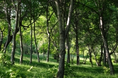 Der Wald wirkt auf uns so friedlich...