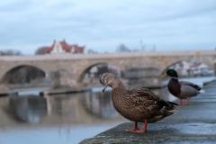 Auch die Ente findet kein Schiff... :-)