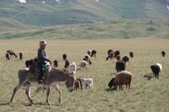 ...und unterwegs treffen wir auf diesen jungen Hirten mit seinen Tieren.