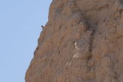 Vögel finden viele nette Plätzchen auf den Ruinen