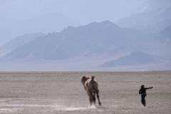 Gerne hätte wir das einzige Kamel aus der Nähe betrachtet, doch es wollte sich nicht einfangen lassen