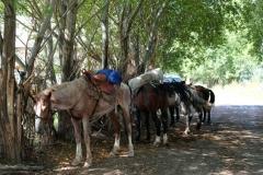 Als wir mit dem Taxi am Startpunkt ankommen, stehen unsere Pferde schon bereit. Zum Glück hat unser Guide große Satteltaschen, sodass wir alles Gepäck darin verstauen können.