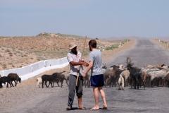 Nette Begegnung mit einem Hirten mitten auf der Straße. Kein weiteres Auto ist weit und breit zu sehen.
