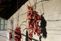 Paprikas hängen zum Trocknen in der Sonne