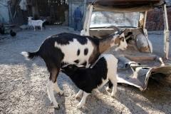Georgis und Petrankas Tiere sind für uns spannend
