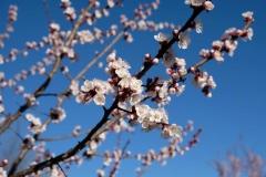 Auch hier hat der Frühling bereits Einzug gehalten