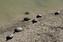 Besonders spannend finden wir die Schilkröten zu Land...