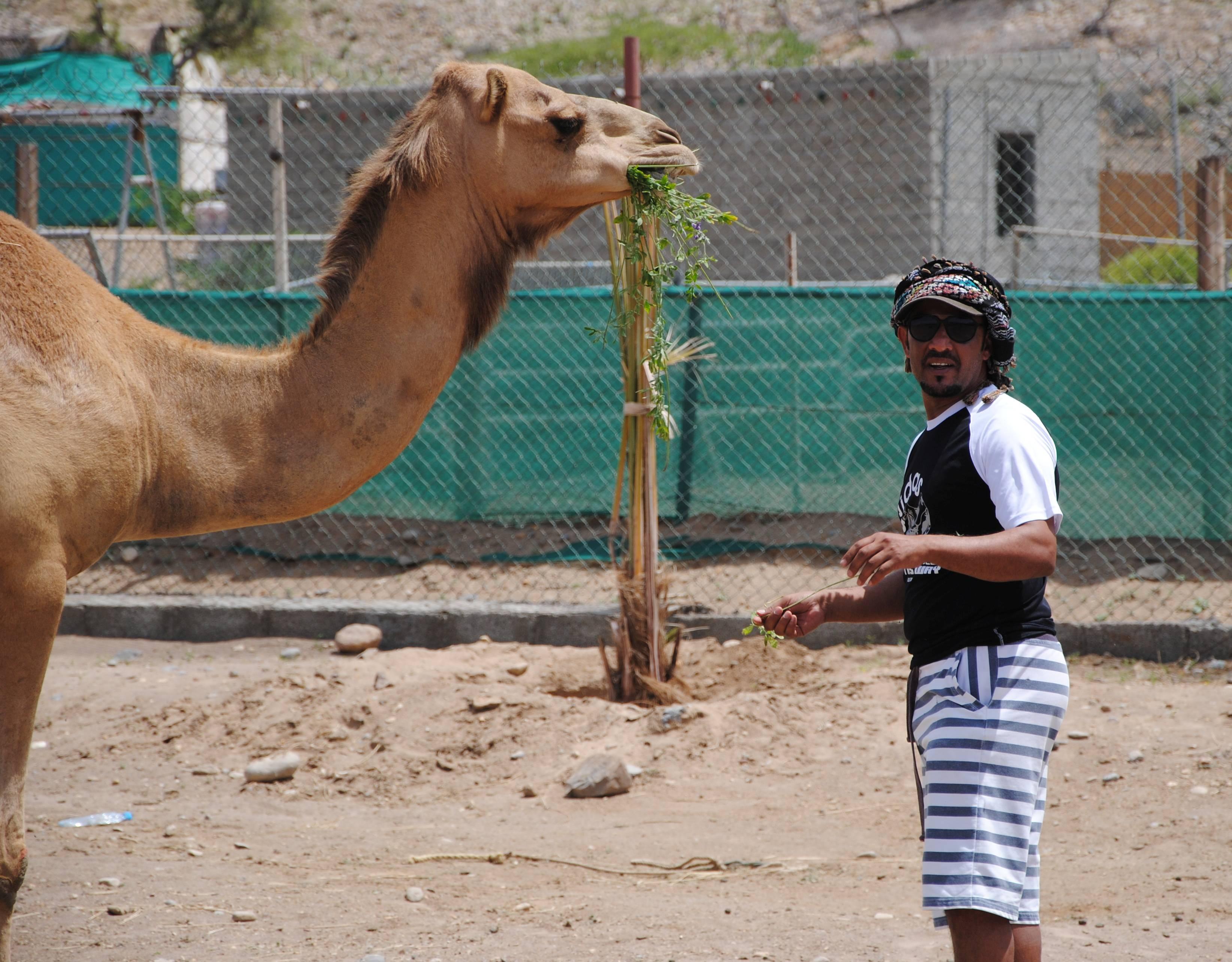 Mubarak stellt uns den Kamelen seines Cousins vor