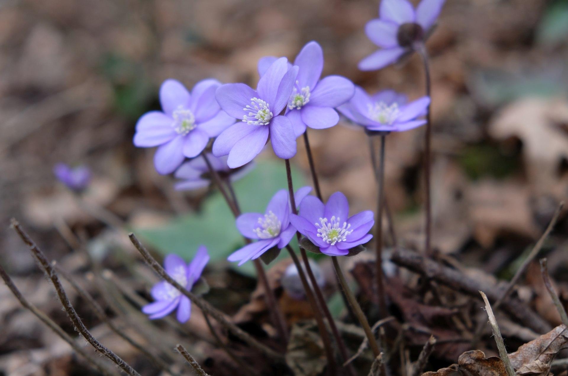 Im Schutz der Bäume haben die ersten Blumen zu blühen begonnen