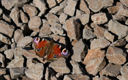 Ein Schmetterling sonnt sich auf dem Gleisbett