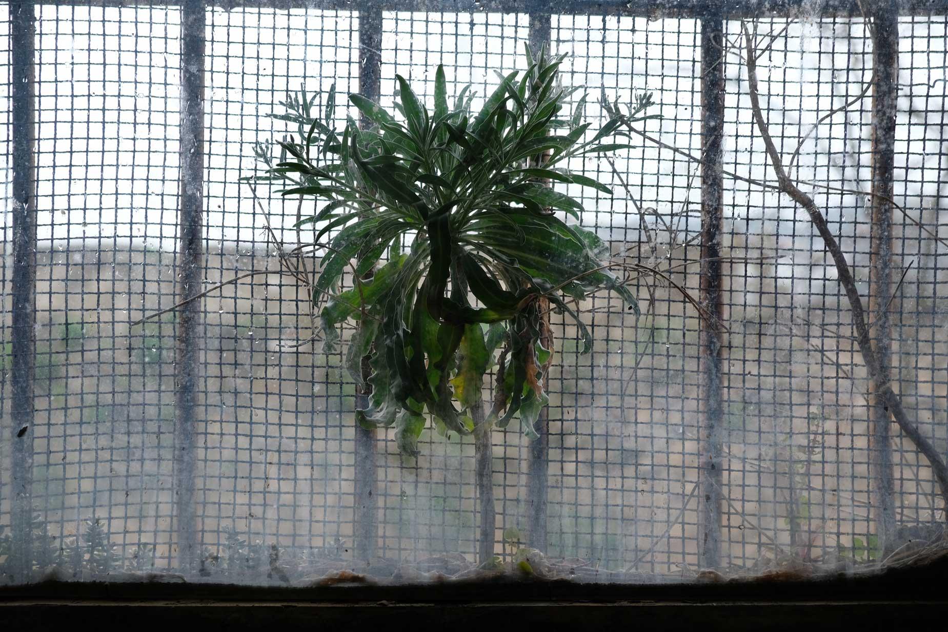 Ein Zeichen von Hoffnung zwischen Fensterscheibe und Gittern