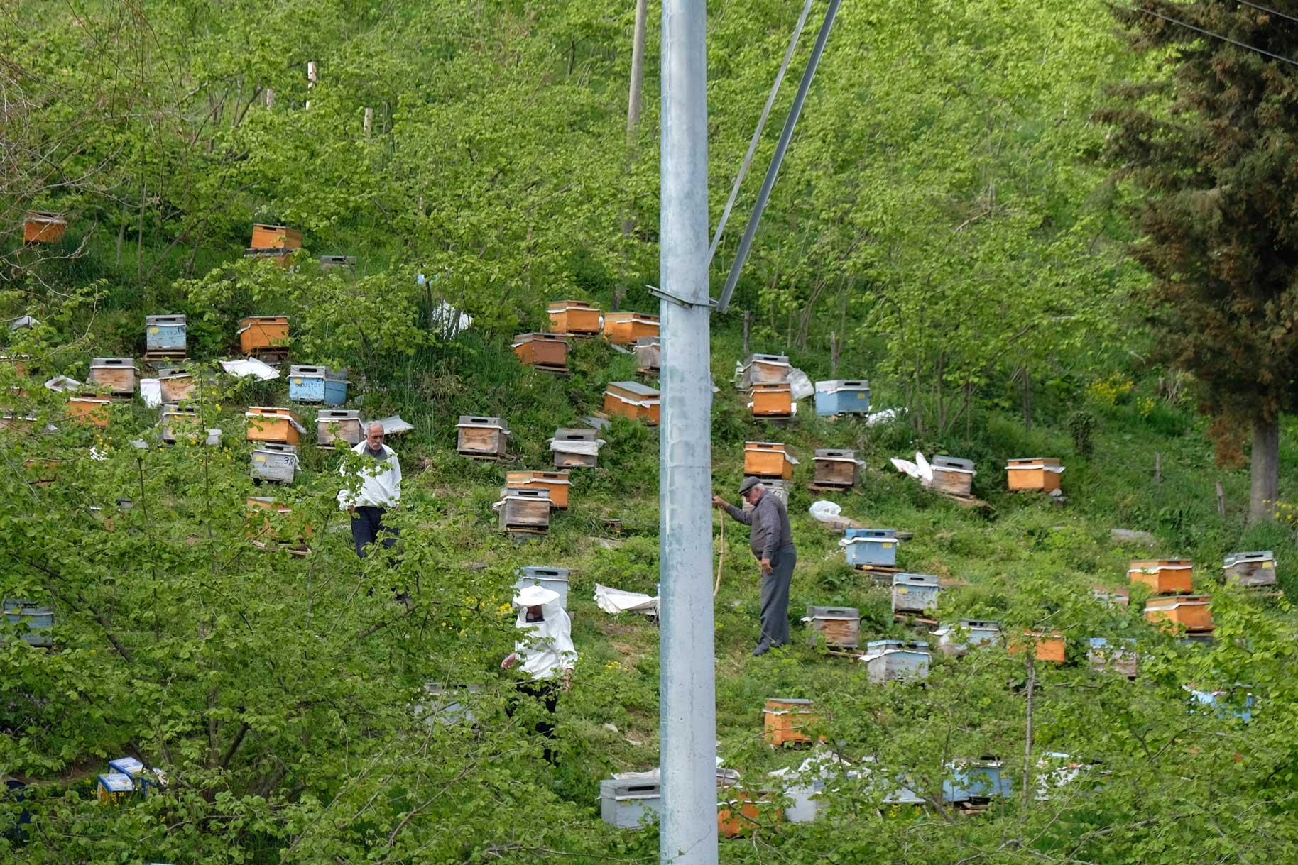 Dazwischen stehen immer wieder Bienenkästen, die hier gerade gewartet werden