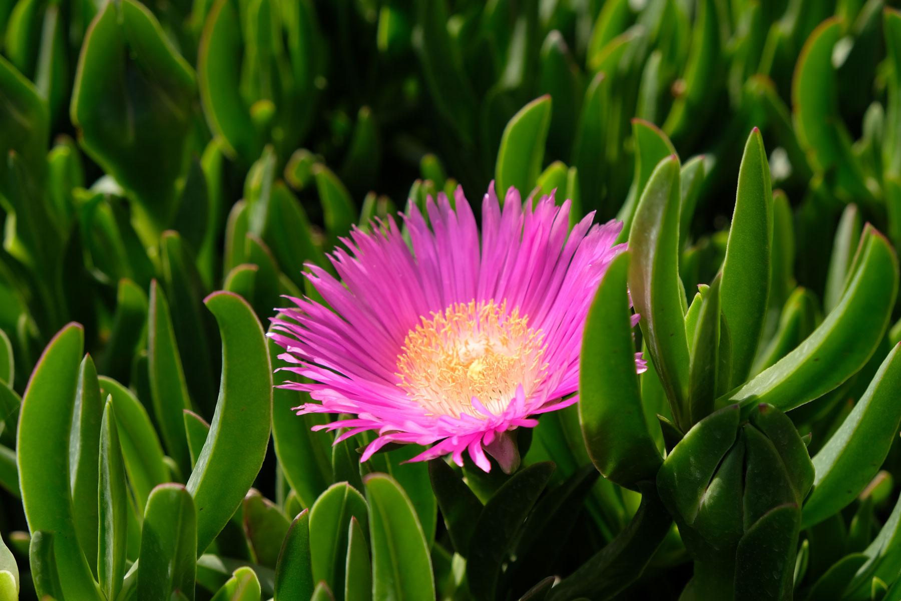 Im Garten finden wir toll leuchtende Blüten