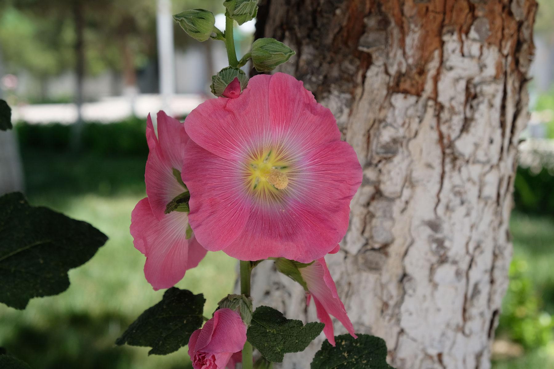 Hübsche Blume - weiß jemand, wie sie heißt?