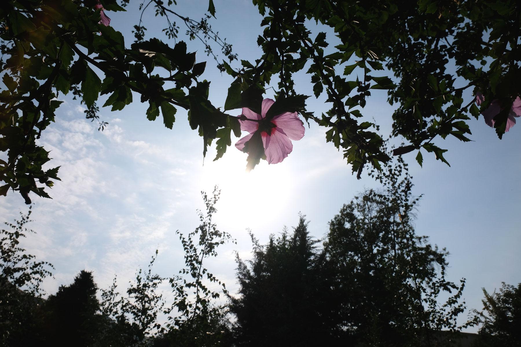 Sommer, Sonne, Blumen