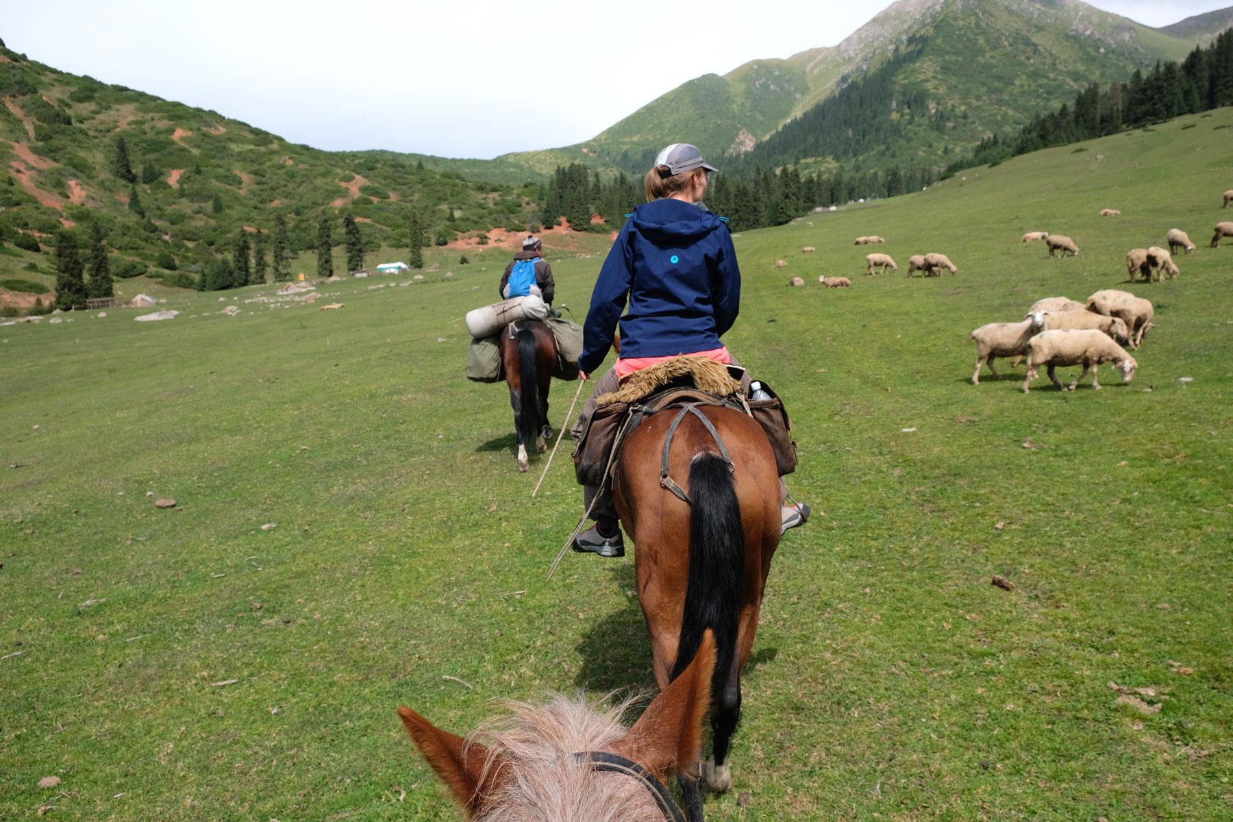 Zwischen Schafsherden und wild umherziehenden Pferden bahnen wir uns den Weg zurück Richtung Karkol