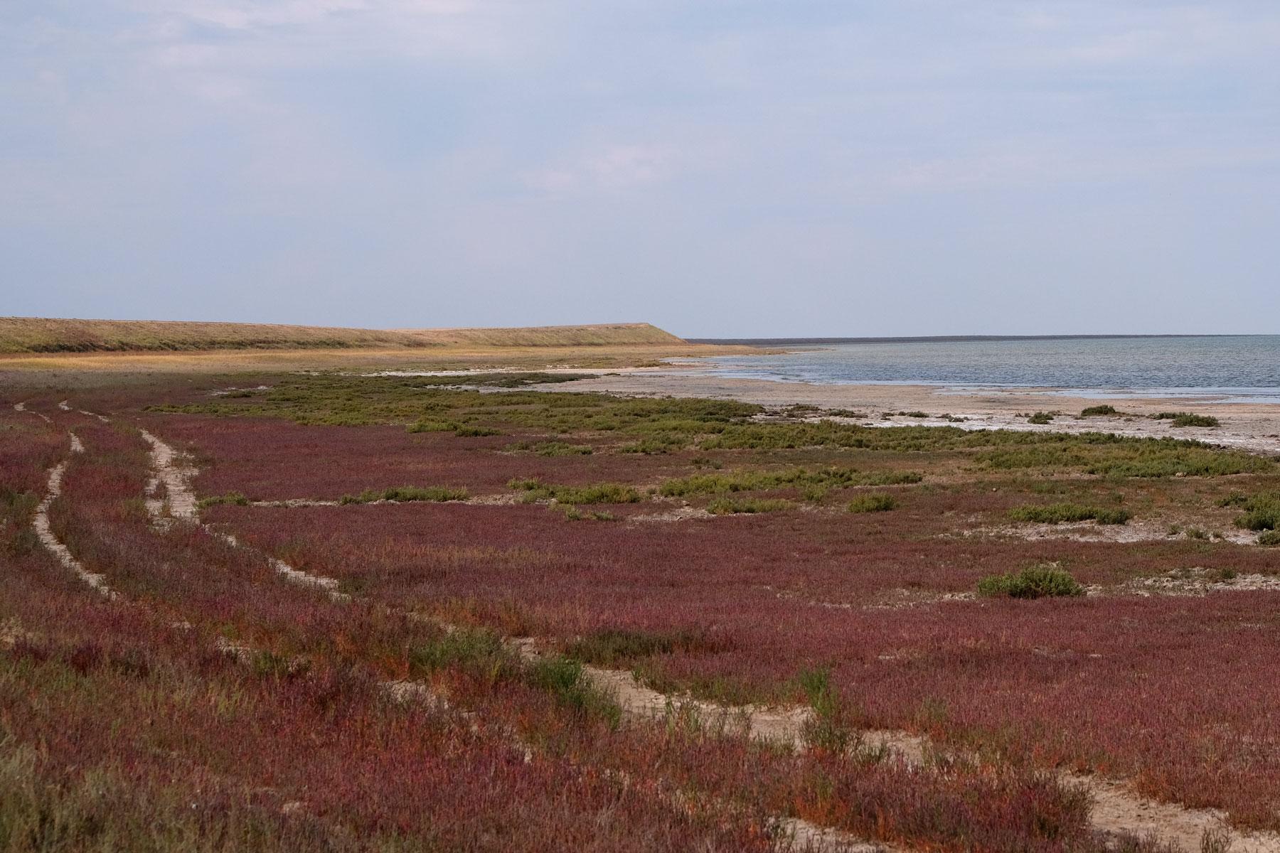 Das Ufer dess Tengiz-Sees ist mit roten Pflanzen bewachsen