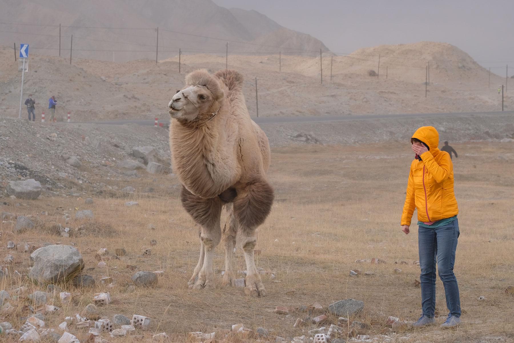 Ich muss mir wegen umherfliegendem Sand die Augen zuhalten, das Kamel ist ungerührt