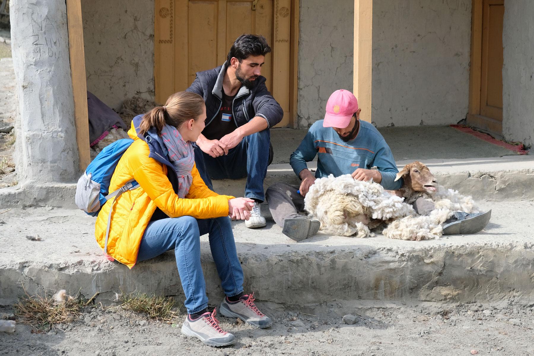 Jafer und Saman zeigen uns, wie die Schafe geschoren werden