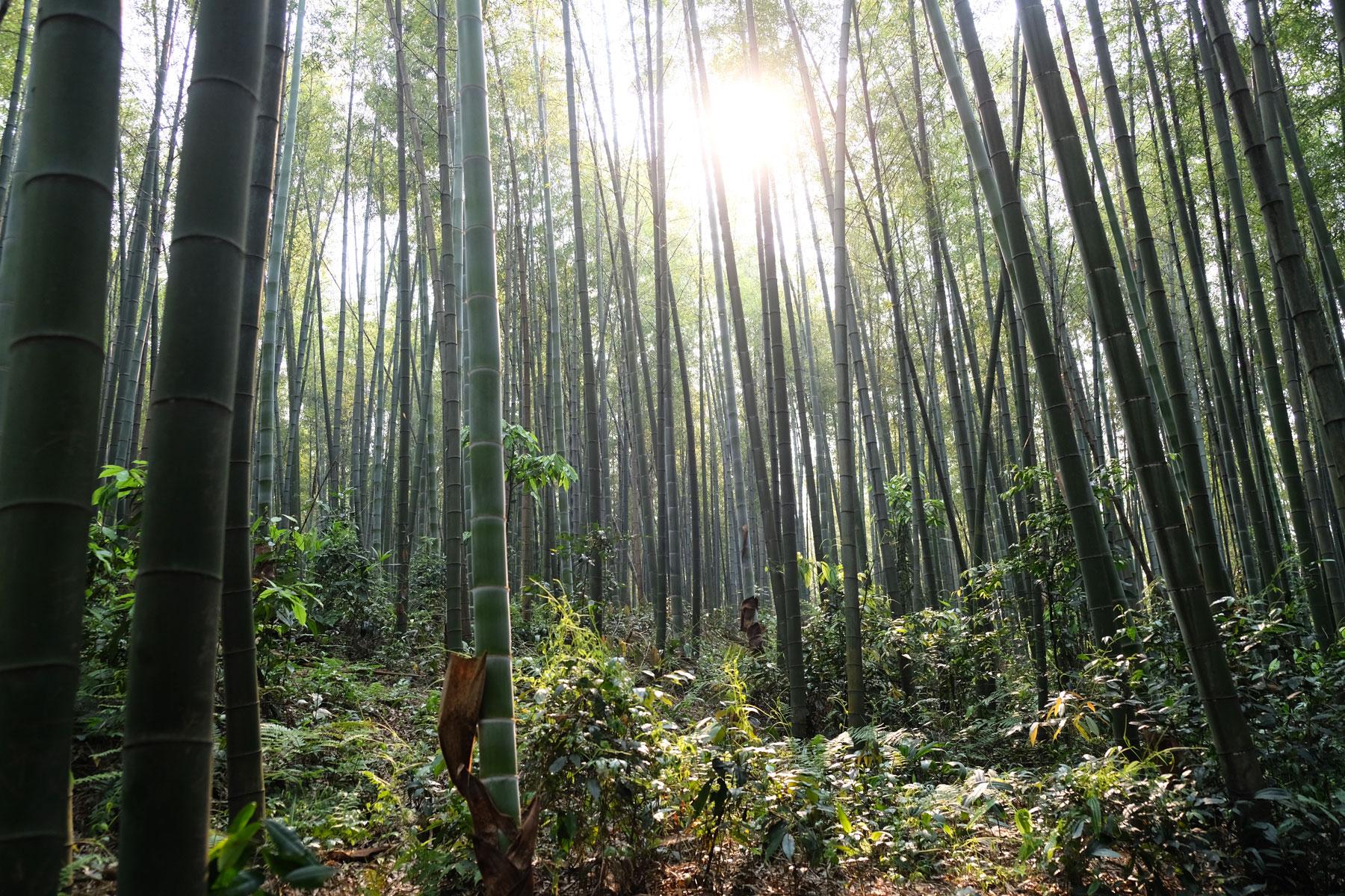 Als wir es schließlich schaffen, die Hauptwege zu verlassen, können wir den schönen Bambuswald endlich genießen