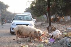 Wir sehen viele Tiere, die bei uns im Stadtbild eher nicht vorkommen