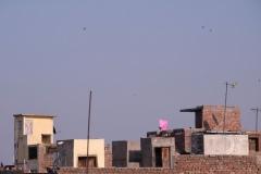 Ganz Amritsar scheint im Drachenfieber zu sein