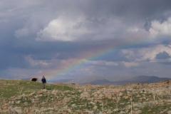 Leo am Ende eines Regenbogens, der sich nach dem Gewitter gebildet hat