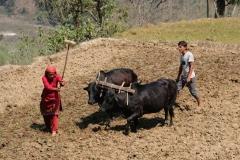 Bei frühlingshaften Temperaturen ist es für die Bewohner an der Zeit, sich um ihre Felder zu kümmern