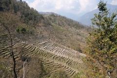 Die terrassenförmig angelegten Felder erfordern viel Handeinsatz und tierische Unterstützung