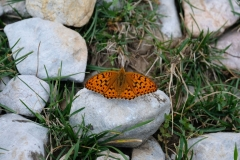 ...und einen tollen Schmetterling.