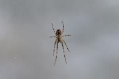 ...Spinnen...