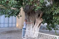 Im Schatten der Bäume lässt es sich aushalten :-)