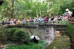 Doch uns zieht es mit vielen Anderen immer wieder zurück zum großen Panda