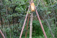 Fast an allen Bäumen, die wir im Breeding Center sehen, hängen Infusionsflaschen. Als wir jemand treffen, der Englisch spricht, erklärt er uns, dass die Bäume mit den nötigen Mineralstoffen versorgt werden müssen - deshalb diese Säckchen