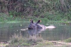 Schon an unserem ersten Abend beobachten wir ein wildes Nashorn, welches sich im Fluss abkühlt