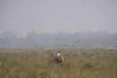 Ein Ranger auf Kontrollspaziergang mit seinem Elefanten im Park