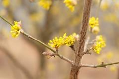 Auch die Sträucher kommen langsam in den Frühlings-Modus