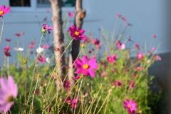 Blumenfreuden