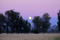 ...und auf einmal geht bereits der Mond auf.