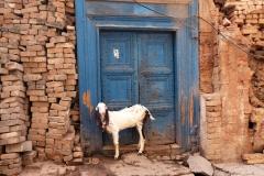 In der Schwesterstadt Rawalpindi geht es dagegen etwas chaotischer zu. Hier sehen wir auch wieder Tiere im Straßenbild. Lebend...