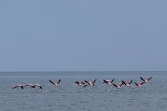 ...und sehen gerade noch, wie ein Schwarm Flamingos davonfliegt.