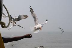 Vom Boot aus können wir beobachten, wie die Tauben mit Snacks gefüttert werden