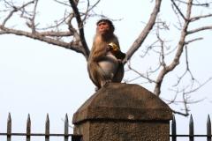 Wiedermal heißt es gut aufpassen auf alles, was interessant für die flinken Finger der geübten Affen sein könnte