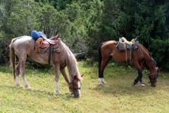 Bei einer erten Pause dürfen sich unsere Pferde ausruhen