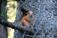 Mit uns im Wald sind mehrere neugierige Eichhörnchen...