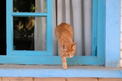 Wo's Katzen gibt, ist's immer schön! :-)