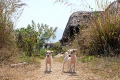 Auf der Farm angekommen, begrüßen uns Tripet und Grupet, die beiden süßen Hundewelpen