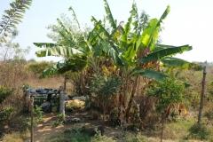 Die zentral gelegenen Bananenpalmen stehen direkt neben der Wasserpumpe, mit der man Wasser zum Kochen und Waschen aus dem Boden befördern kann