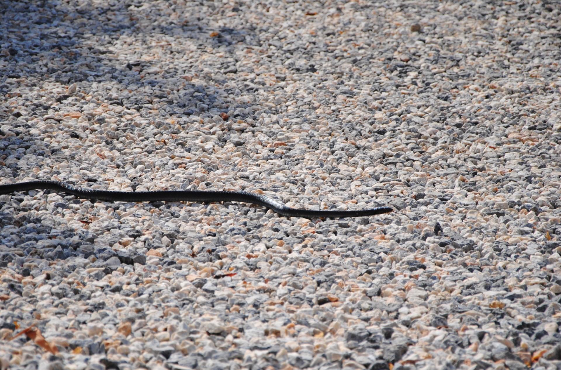 Eine Schlange auf dem Boden